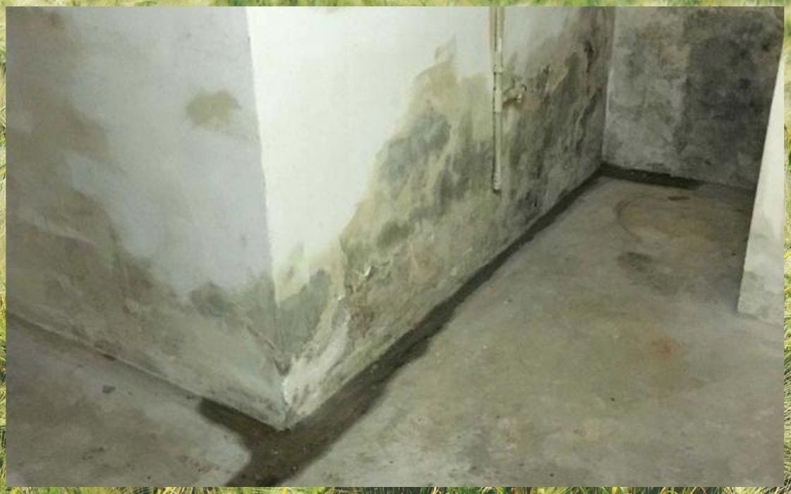 Basement green mold