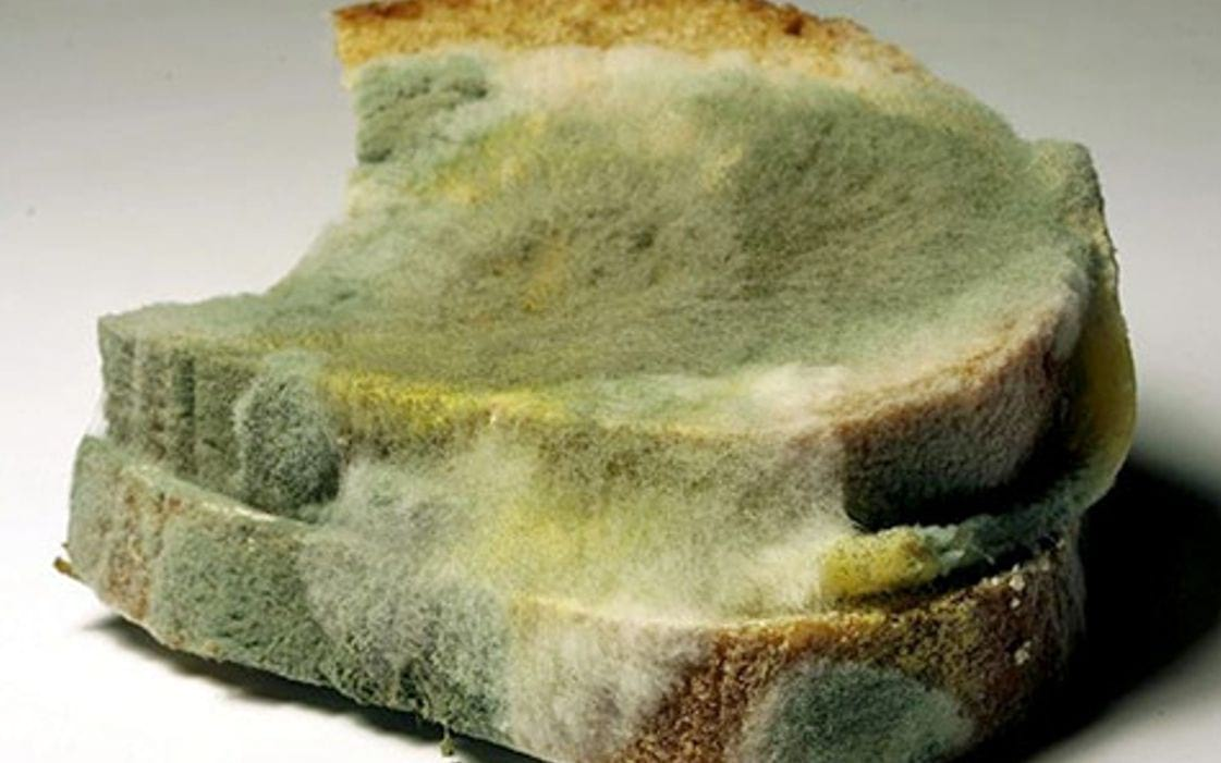 Bread green mold