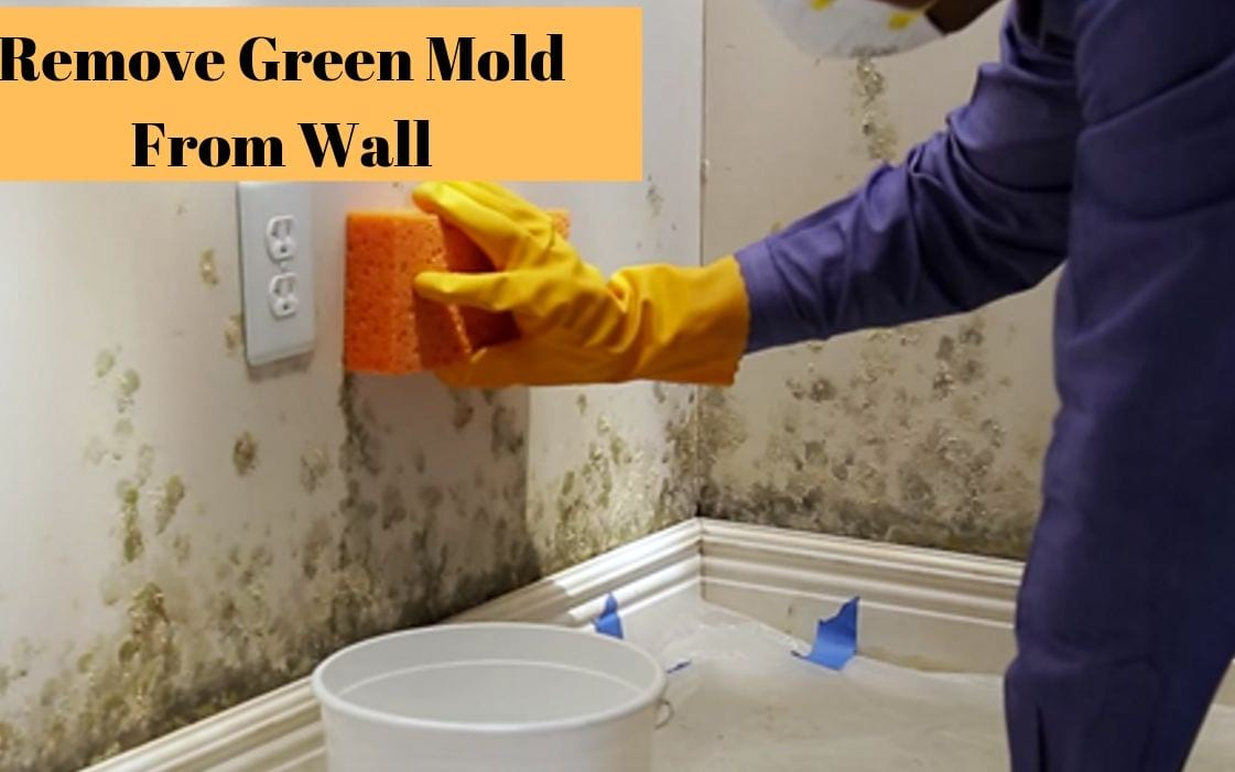 Remove green mold from wall