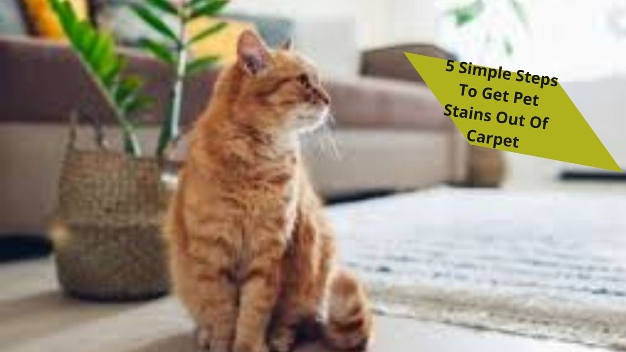 pet stains